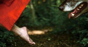 Σταμάτα να είσαι Κοκκινοσκουφίτσα ένας λύκος πάντα θα σε τρώει